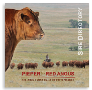 pieper-red-angus-sire-directory